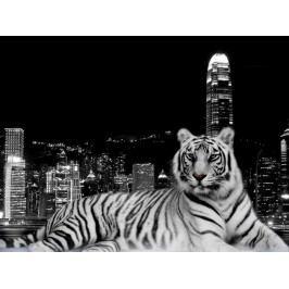 Městský tygr (60 x 45 cm) -  Plakát