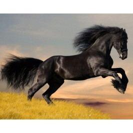 Běžící kůň 2 (60 x 48 cm) -  Plakát na zeď