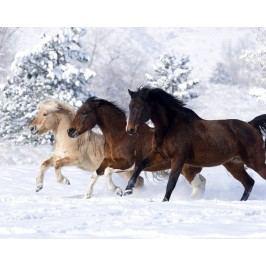 Koně ve sněhu (60 x 48 cm) -  Plakát na zeď