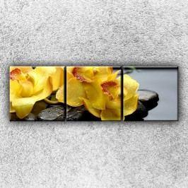 Žlutá orchidea na kamenech 3 (75 x 25 cm) -  Třídílný obraz