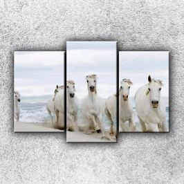 Koně na pláži 2 (75 x 50 cm) -  Třídílný obraz