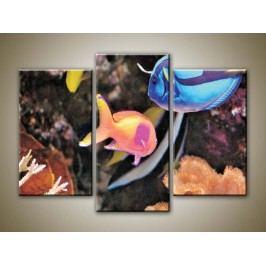 Mořské ryby (75 x 50 cm) -  Třídílný obraz