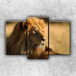 Pohled lva 4 (75 x 50 cm) -  Třídílný obraz