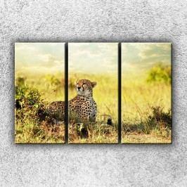 Gepard v pozoru 3 (90 x 60 cm) -  Třídílný obraz