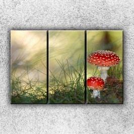 Muchomůrky 2 (90 x 60 cm) -  Třídílný obraz