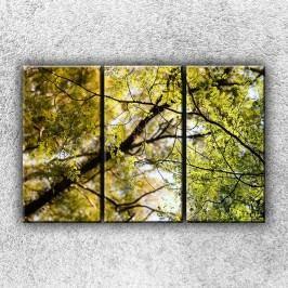 V koruně stromu 2 (90 x 60 cm) -  Třídílný obraz