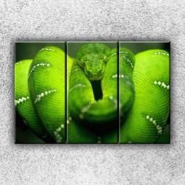Zelený stočený had 2 (90 x 60 cm) -  Třídílný obraz
