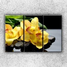 Žlutá orchidea na kamenech 4 (90 x 60 cm) -  Třídílný obraz