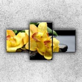 Žluté orchideje na kamenech (90 x 50 cm) -  Třídílný obraz