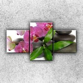 Květy orchidejí 2 (90 x 50 cm) -  Třídílný obraz