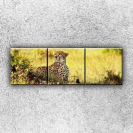 Gepard v pozoru 4 (120 x 40 cm) -  Třídílný obraz