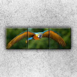 Letící papoušek Ara (120 x 40 cm) -  Třídílný obraz