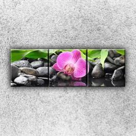Růžová orchidej 1 (120 x 40 cm) -  Třídílný obraz