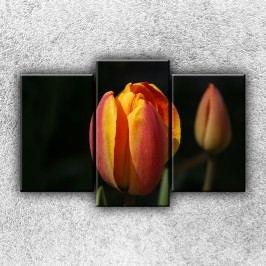 Žíhaný tulipán 4 (75 x 50 cm) -  Třídílný obraz