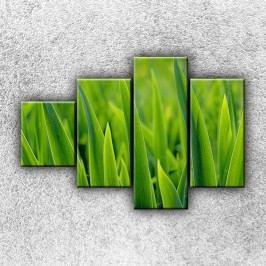 Stébla trávy 2 (100 x 70 cm) -  Čtyřdílný obraz
