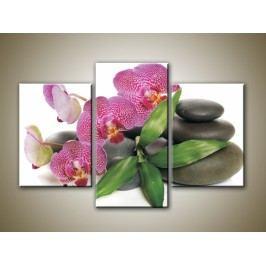 Orchidea na kamenech 2 (105 x 70 cm) -  Třídílný obraz