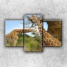 Žirafí pár 2 (105 x 70 cm) -  Třídílný obraz