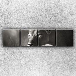 Lvice na lovu 1 (160 x 40 cm) -  Čtyřdílný obraz