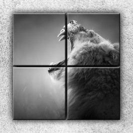 Xdecor Řev lva (100 x 100 cm) -  Čtyřdílný obraz