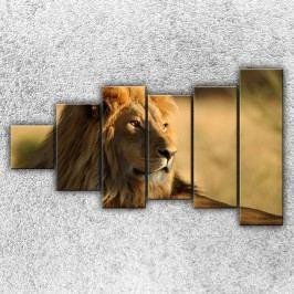 Lev 2 (150 x 90 cm) -  Šestidílný obraz