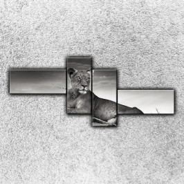 Ležící lev 3 (200 x 85 cm) -  Čtyřdílný obraz