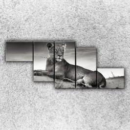 Ležící lev 4 (170 x 70 cm) -  Pětidílný obraz