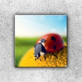 Beruška heřmánku 1 (30 x 30 cm) -  Jednodílný obraz