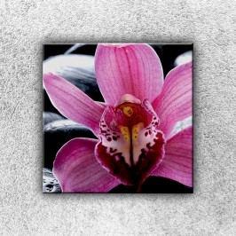Fialková orchidej 1 (30 x 30 cm) -  Jednodílný obraz