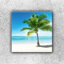 Osamocená palma 1 (30 x 30 cm) -  Jednodílný obraz