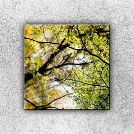 V koruně stromu 1 (30 x 30 cm) -  Jednodílný obraz