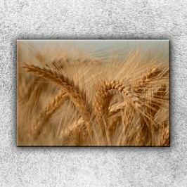 Klasy ječmenu (50 x 35 cm) -  Jednodílný obraz