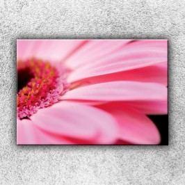 Růžová gerbera (50 x 35 cm) -  Jednodílný obraz
