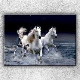 Divocí koně 1 (70 x 50 cm) -  Jednodílný obraz