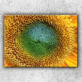 Květ slunečnice (70 x 50 cm) -  Jednodílný obraz