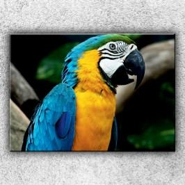 Modrý papoušek ara (70 x 50 cm) -  Jednodílný obraz