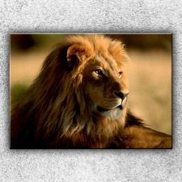 Pohled lva 2 (70 x 50 cm) -  Jednodílný obraz
