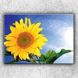 Slunečnice 3 (70 x 50 cm) -  Jednodílný obraz
