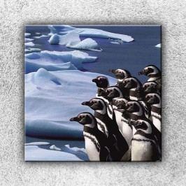 Skupina tučňáků 1 (70 x 70 cm) -  Jednodílný obraz