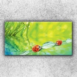 Berušky (100 x 50 cm) -  Jednodílný obraz