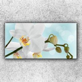 Bílá orchidej 2 (100 x 50 cm) -  Jednodílný obraz