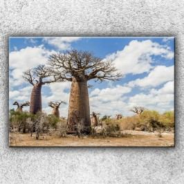 Baobaby (120 x 80 cm) -  Jednodílný obraz