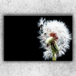 Chmýří pampelišek 3 (120 x 80 cm) -  Jednodílný obraz