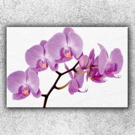Fialová orchidej (120 x 80 cm) -  Jednodílný obraz