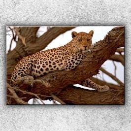 Gepard na stromě (120 x 80 cm) -  Jednodílný obraz