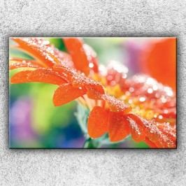Květ s rosou (120 x 80 cm) -  Jednodílný obraz