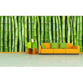 Zelený bambus (126 x 63 cm) -  Fototapeta na zeď