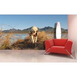 Pes a kachna (126 x 71 cm) -  Fototapeta na stěnu