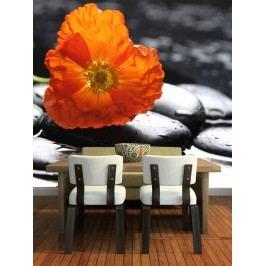 Oranžový květ na kameni (126 x 80 cm) -  Fototapeta