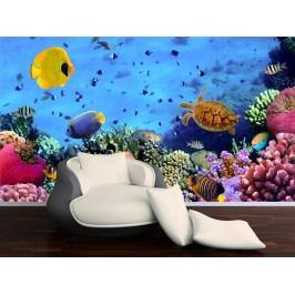 Rybky v akváriu 3 (126 x 83 cm) -  Fototapeta na zeď