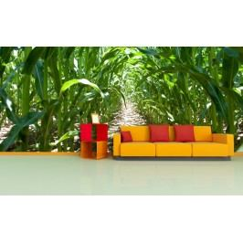 Kukuřičné pole (126 x 84 cm) -  Fototapeta na zeď